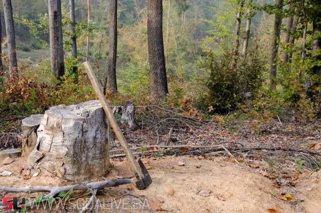 Nekontrolisana sječa i krađa šume - velike šanse za stvaranje klizišta / Foto: SodaLIVE.ba