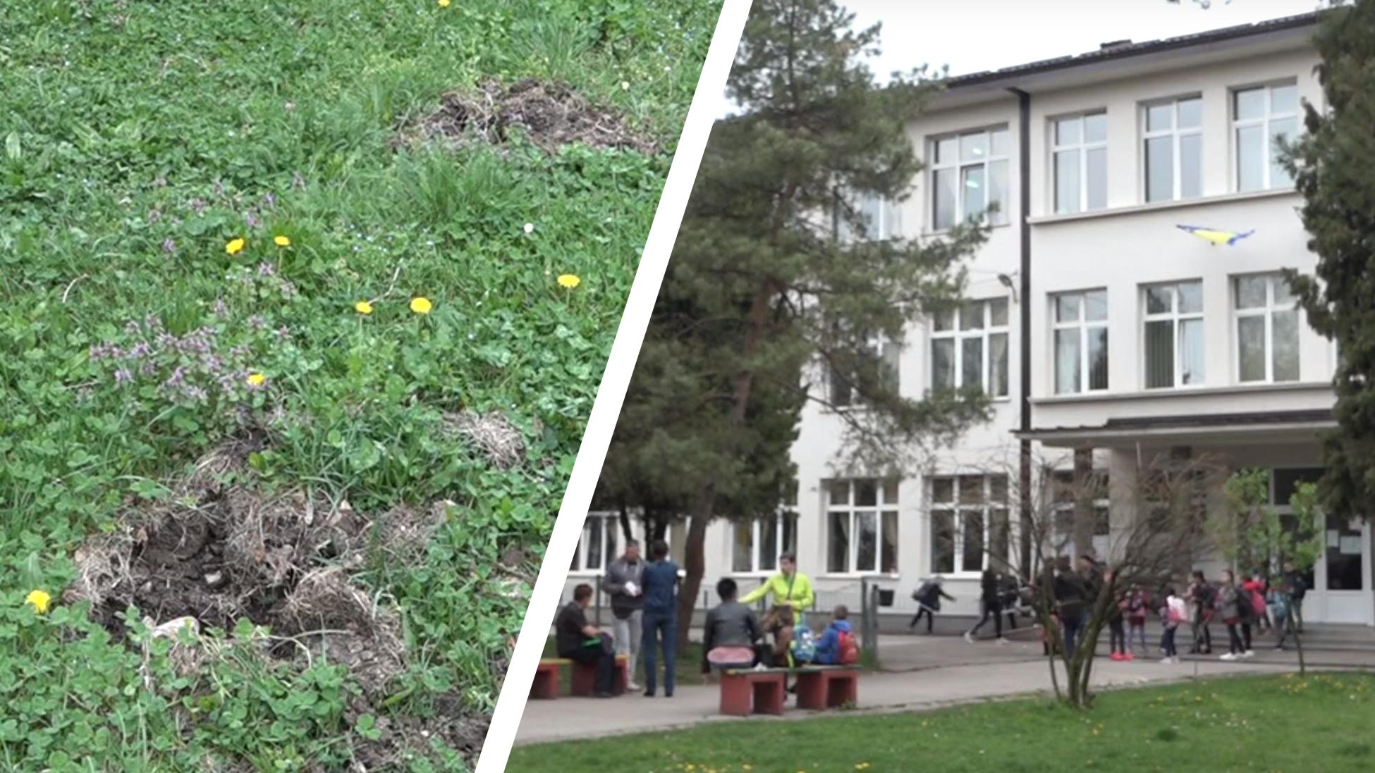 """Rezultat slika za Vandali počupali sadnice čempresa u dvorištu OŠ """"Lukavac Mjesto"""""""