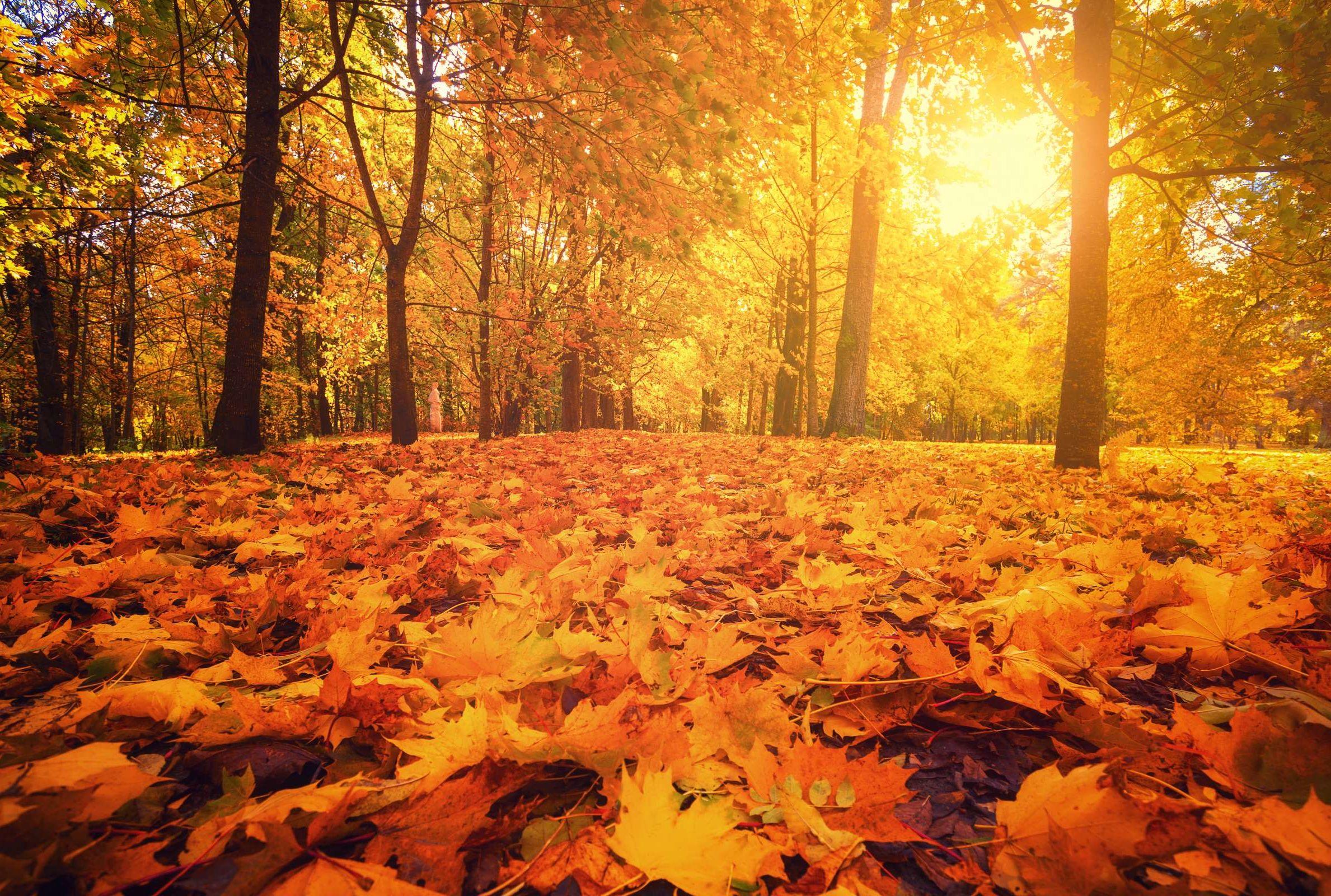 Danas je prvi dan jeseni